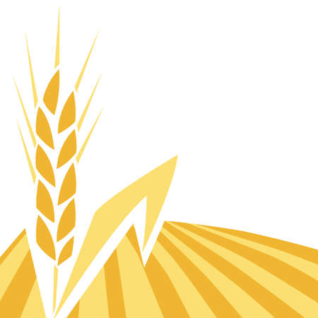 Background with wheat. Agricultural image of natural golden ear of barley or rye.