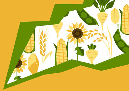 Background with agricultural crops. Harvesting stylized illustration. Vegetables and cereals.