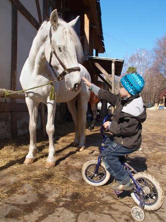 A little boy talks to a white horse.