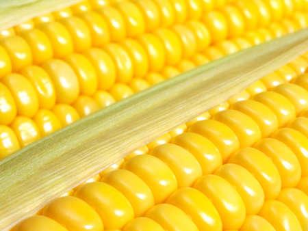 Yellow ripe corn closeup photo