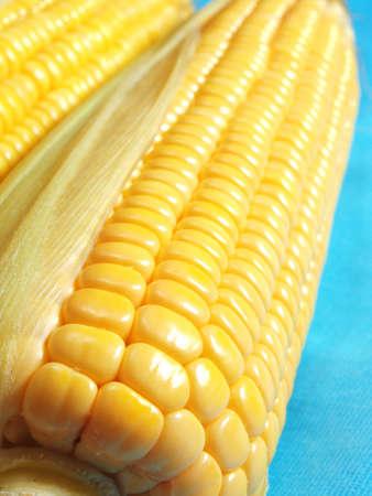 Yellow ripe corn closeup