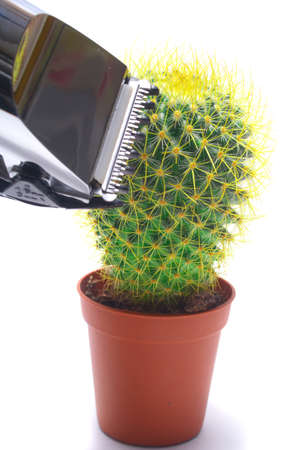 Cactus and hairclipper isolated on white background photo