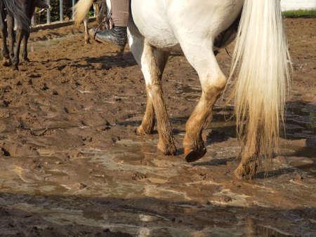 Horses with riders riding on the rainy season
