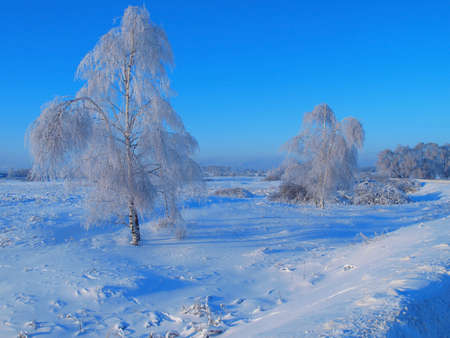 Winter landscape with birch trees on a background of snow-covered field