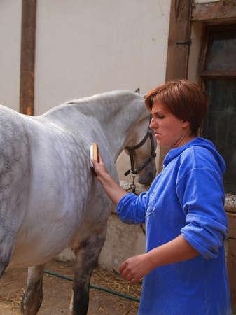 light brown horse: Woman cleans horse lattice