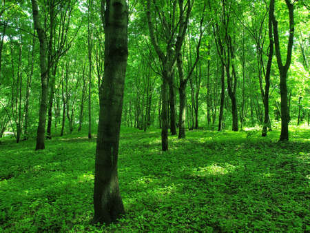 Wild green forest in the early morning Stock Photo