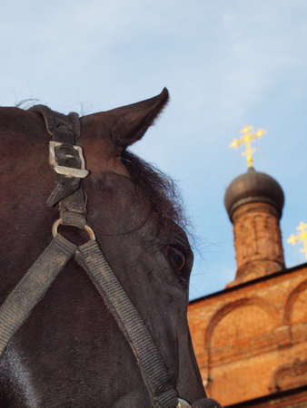 The horses head against the sky and the Cross