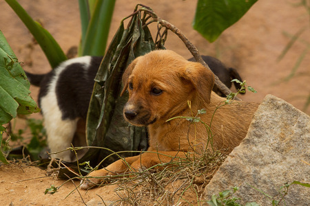 feral: photo of feral puppies Stock Photo