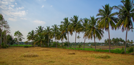 Landscape photo of Indian farm land on a hot sunny day