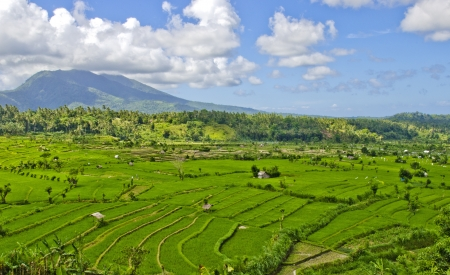 lanscape: Lanscape of Rice Field in Bali, Indonesea Stock Photo