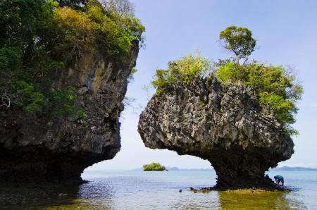 Koh Pak bia on Andaman sea,Krabi, Thailand