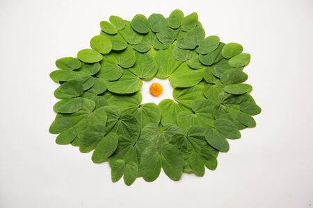 Indian Festival Dussehra, symbolic Golden or Piliostigma leaf or Bauhinia racemosa also known as Apta patti, arranged in circular pattern on white background.