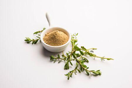 Bacopa monnieri herb plant or Ayurvedic Brahmi plant with powder in a bowl, selective focus Archivio Fotografico