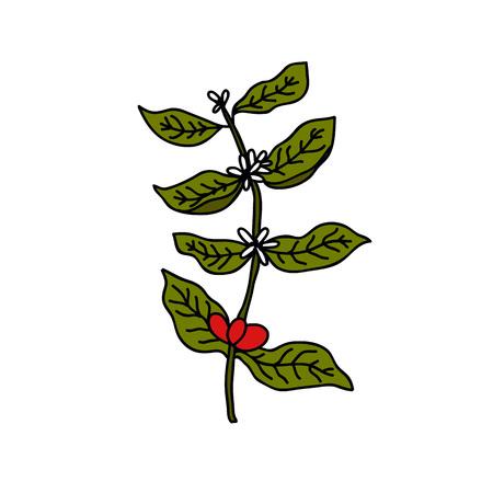 coffee plant doodle icon