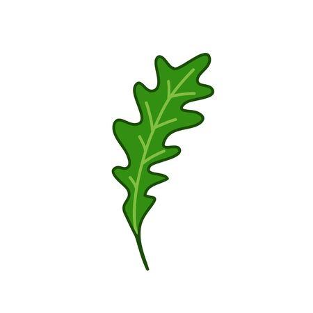arugula doodle icon, vector color illustration Illusztráció