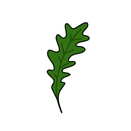 arugula doodle icon, vector color illustration 向量圖像