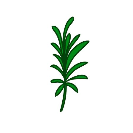 rosemary doodle icon, vector color illustration