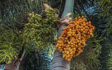 bark of palm tree: Areca nut palm Stock Photo