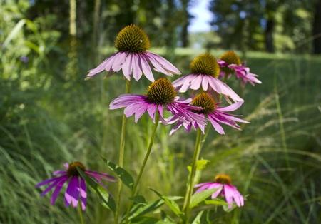 Flowers in Bagatelle park Imagens