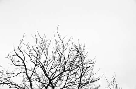 vida natural: rama de un árbol en el cielo blanco