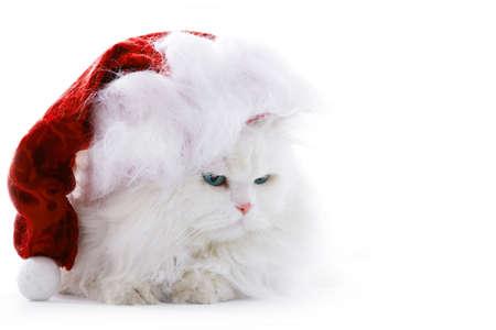 Amusing white fluffy cat in the Santa cap