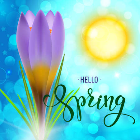 Realistic violet crocus on a sunlight background. Original handwritten text Hello Spring. Illustration for posters, greeting cards, prints and web projects. Illustration