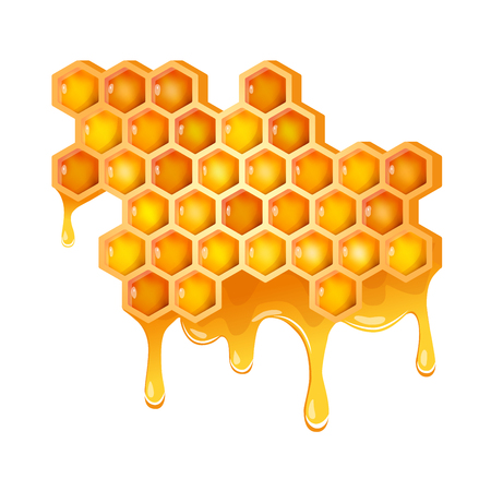 Honeycomb with flowing honey. Vector Illustration
