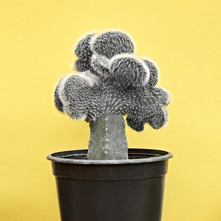 Cactus. Minimal Stillife. Art Gallery Fashion Design. Creative Black and white Style. Concept on Yellow background. Detail