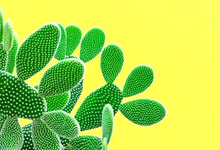Cactus Fashion Set. Zoete zomerstijl. Kunstgalerij Ontwerp. Minimale mode Stillife. Vanille Trendy heldere kleuren. Groene Neon Cactusstemming, surrealisme. Creative Unusual Fun. Gele achtergrond Stockfoto