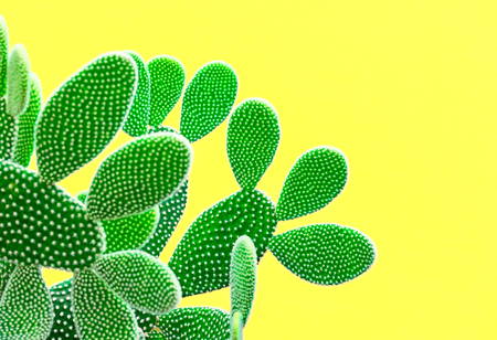 Cactus Fashion Set. Sweet Summer Style. Art gallery Design. Minimal fashion Stillife. Vanilla Trendy Bright Colors. Green Neon Cactus Mood, Surrealism. Creative Unusual Fun. Yellow background