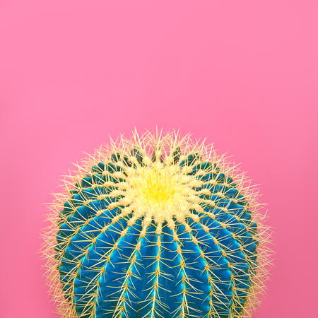 Cactus. Art Gallery Fashion Design. Minimal Stillife. Blue cactus Mood. Trendy Bright Summer Colors. Creative Unusual Style. Fashion Concept, pink background. Detail