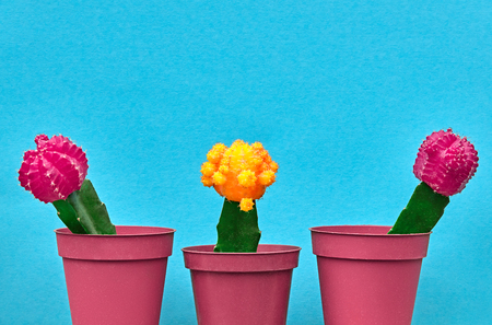 Cactus Fashion Design Set. Minimal fashion Stillife. Trendy Bright Colors. Pink Yellow Cactus Mood on Blue background Zdjęcie Seryjne