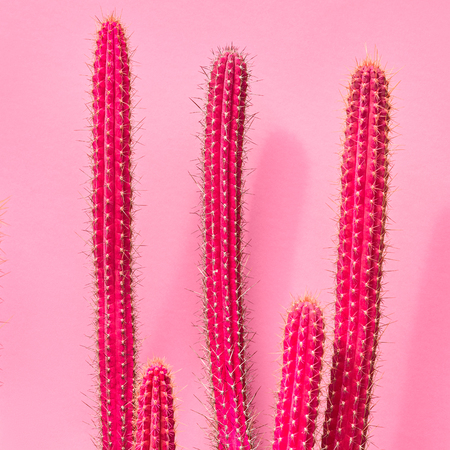 Cactus Fashion Set Design. Minimal fashion Stillife. Trendy Bright Colors. Pink Neon Cactus Mood on Pink background Zdjęcie Seryjne