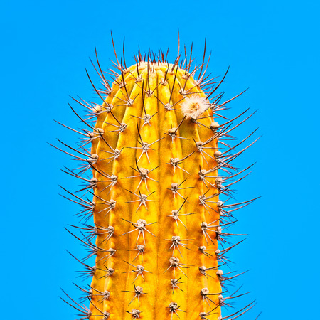 Yellow Cactus Neon. Minimal Stillife. Art Gallery Fashion Design. Concept on Blue background. Detail
