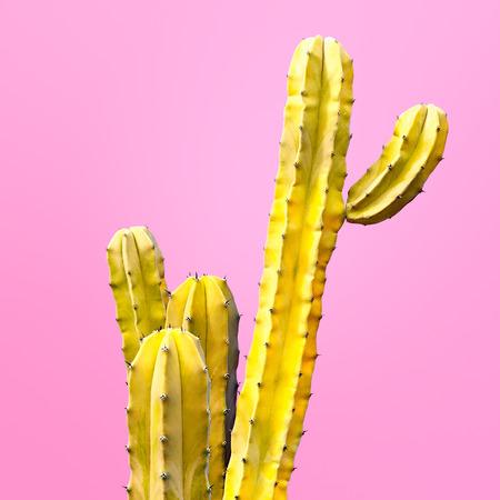 선인장 패션 세트 디자인. 최소 패션 Stillife. 트렌디 한 밝은 색상. 분홍색 배경에 노란색 선인장 기분
