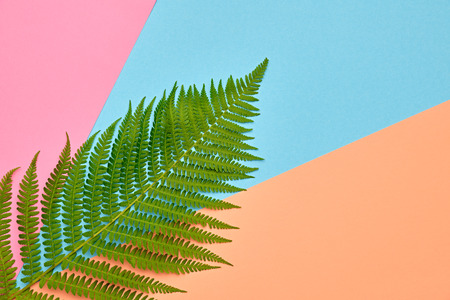Floral Leaves Fashion Concept. Design. Art Gallery. Minimal. Green Tropical Fern Leaf on Pink. Autumn fashion Stock Photo
