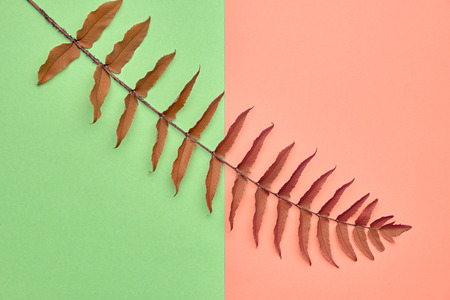 Fall Leaves Background. Fall Fashion Design. Art Gallery. Minimal. Yellow Fern Leaf. Pastel Colors. Autumn Concept Stock Photo