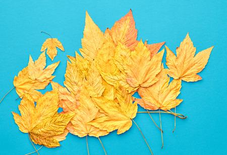 Autumn Fashion Fall Leaves Background. Vintage. Design. Yellow Fall Leaves on Blue. Trendy fashion Stylish Concept. Autumn Vintage Stock Photo