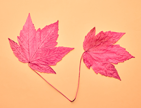 Autumn Arrives. Art Gallery. Minimal. Pink Fall Leaves Background. Pink Maple Leaves Couple. Fall Fashion Design. Vintage on Yellow