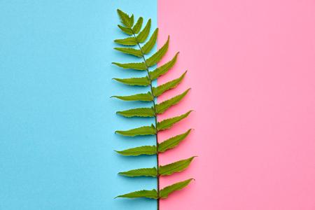 Fern Tropical Leaf. Floral Leaves Fashion Concept. Vivid Design. Art Gallery. Creative Bright Color. Minimal Style. Green Summer fashion