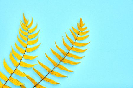 Autumn Arrives. Fall Leaves Background. Fern Leaf Fashion Design. Art Gallery. Minimal. Yellow fern Leaf on Blue. Autumn fall fashion. Vintage Concept Stock Photo