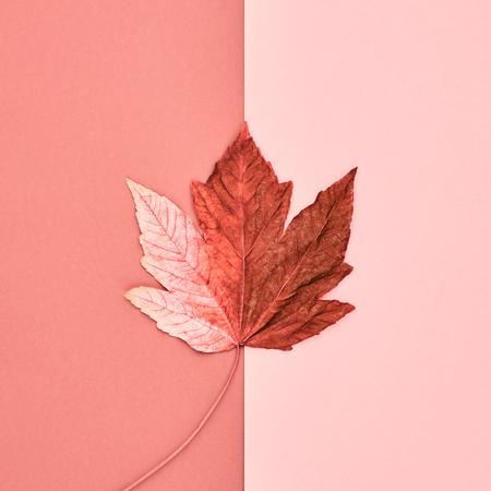 가을 도착. 가 단풍 배경. 가을 패션 디자인. 미술관. Minimal.Maple 리프에 핑크입니다. 가을 빈티지 개념 스톡 콘텐츠 - 85386788