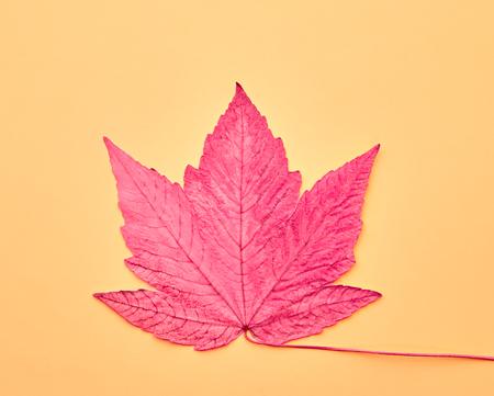 Fall Leaf Background. Autumn Arrives. Fashion Design. Art Gallery. Minimal. Pink Maple Leaf on Yellow. Autumn Vintage Concept Stock Photo