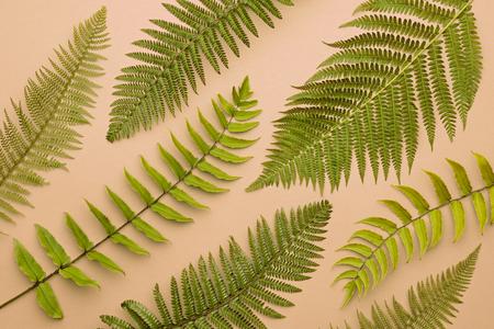 Autumn Arrives. Fall Leaves Background. Fern Leaf Fashion Design. Art Gallery. Minimal. Yellow fern Leaf on Pink. Autumn fall fashion. Vintage Concept