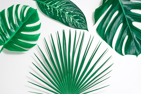 Creative Tropical Fresh Palm Leaves Set. Green Summer Design. Art Bright Summer Layout. Nature Beach leaves background. Minimal. Detail Zdjęcie Seryjne