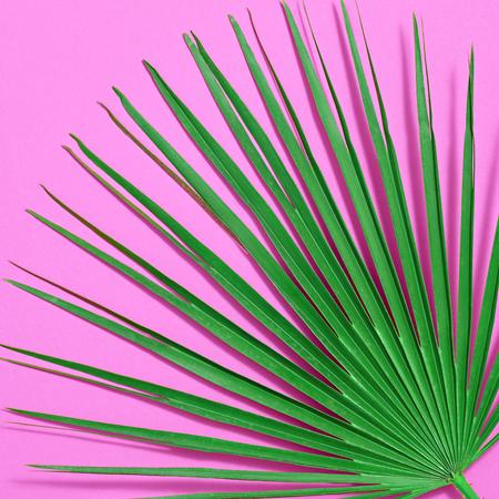 Kreatywnych liści tropikalnych świeżych Palm Fan. Zielony letni projekt. Jasny różowy letni kolor. Natura plaża liść tło. Minimalna sztuka Szczegół