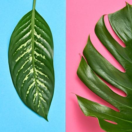 Tropikalne świeże liście palmowe. Kreatywny letni modny zestaw projektowy. Koncepcja kolorowej mody. Jasne lato tło, plaża. Minimalna sztuka Szczegół
