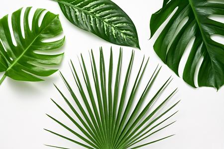 Zestaw kreatywnych tropikalnych świeżych liści palmowych. Zielony letni projekt. Układ Art Bright Summer. Natura plaża opuszcza tło. Minimalny. Szczegół