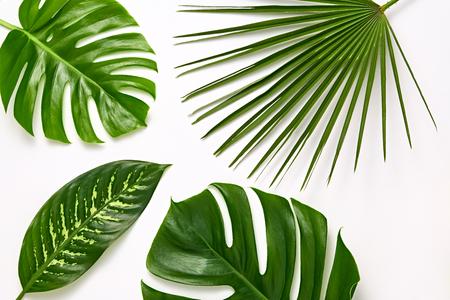 Zestaw kreatywnych tropikalnych świeżych liści palmowych. Zielony letni projekt. Układ Art Bright Summer.