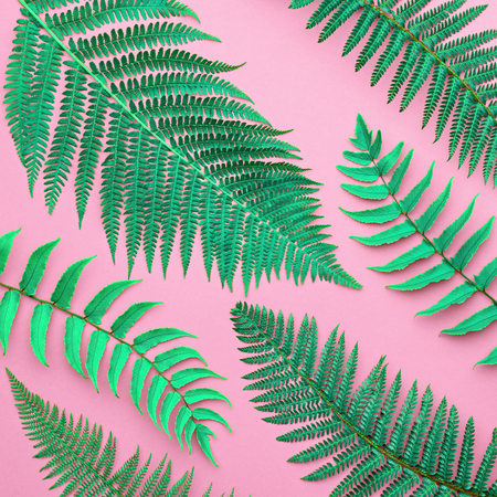 Creative Tropical Fresh Fern Leaves. Nature Background. Green Summer Design.